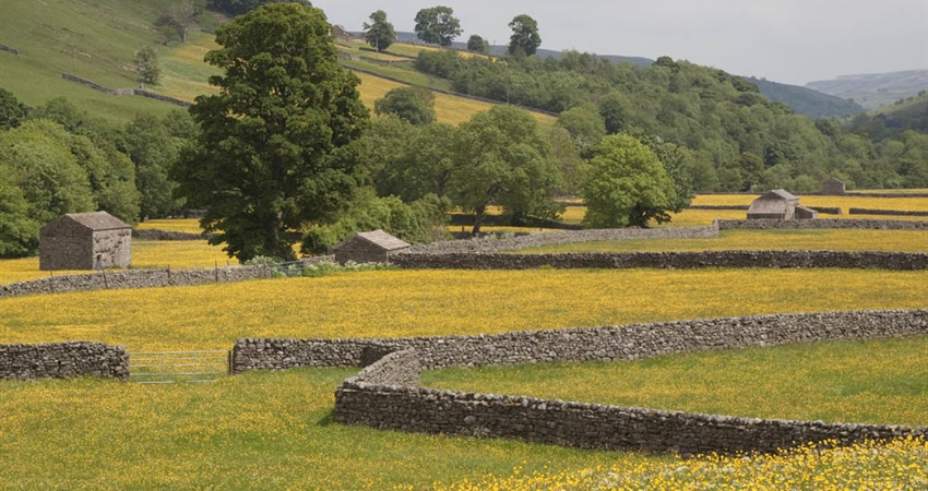 Why not visit us next year and enjoy one of the most beautiful wild meadows in Swaledale